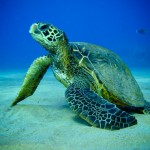 Turtles…Some basic information