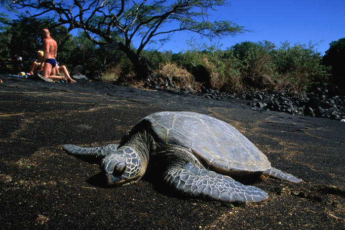 endangered-sea-turtle-beach
