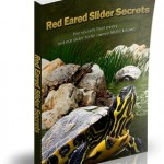 Red Eared Slider Secrets – Turtle Care Guide