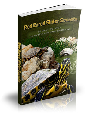Red Eared Slider secrets