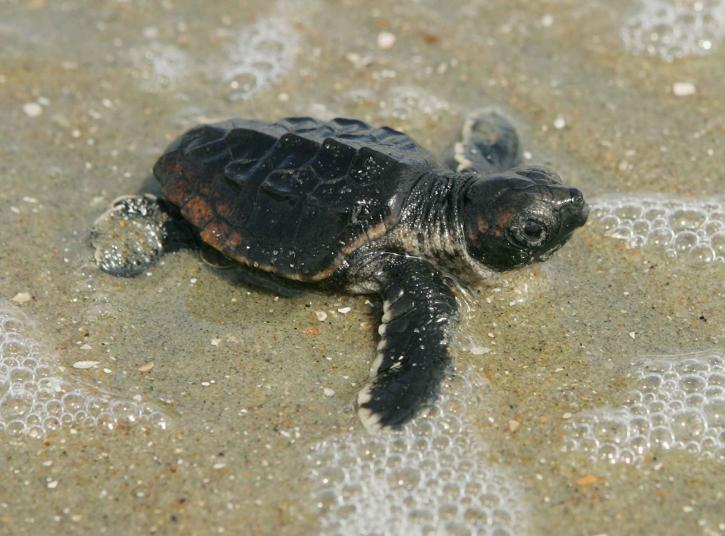 Cute Beach Turtle