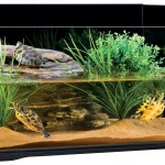 Turtle Tank – for the Well Being of Your Turtles