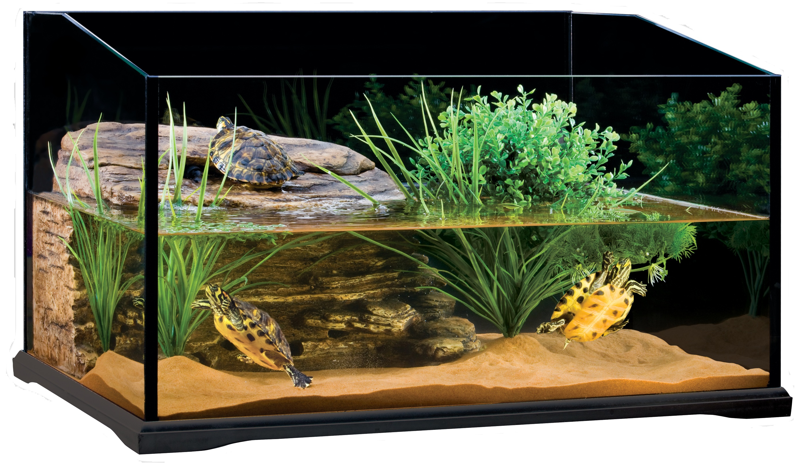 turtle tank for the well being of your turtles info turtle. Black Bedroom Furniture Sets. Home Design Ideas