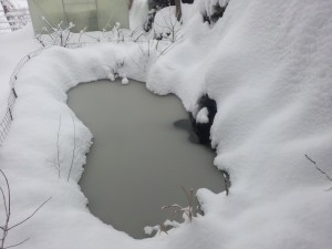 Turtle pond at winter