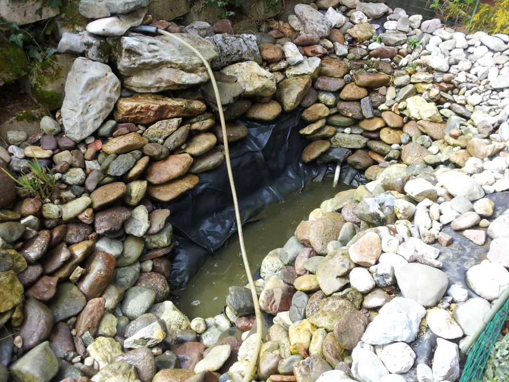 Clean the pond and refill with water