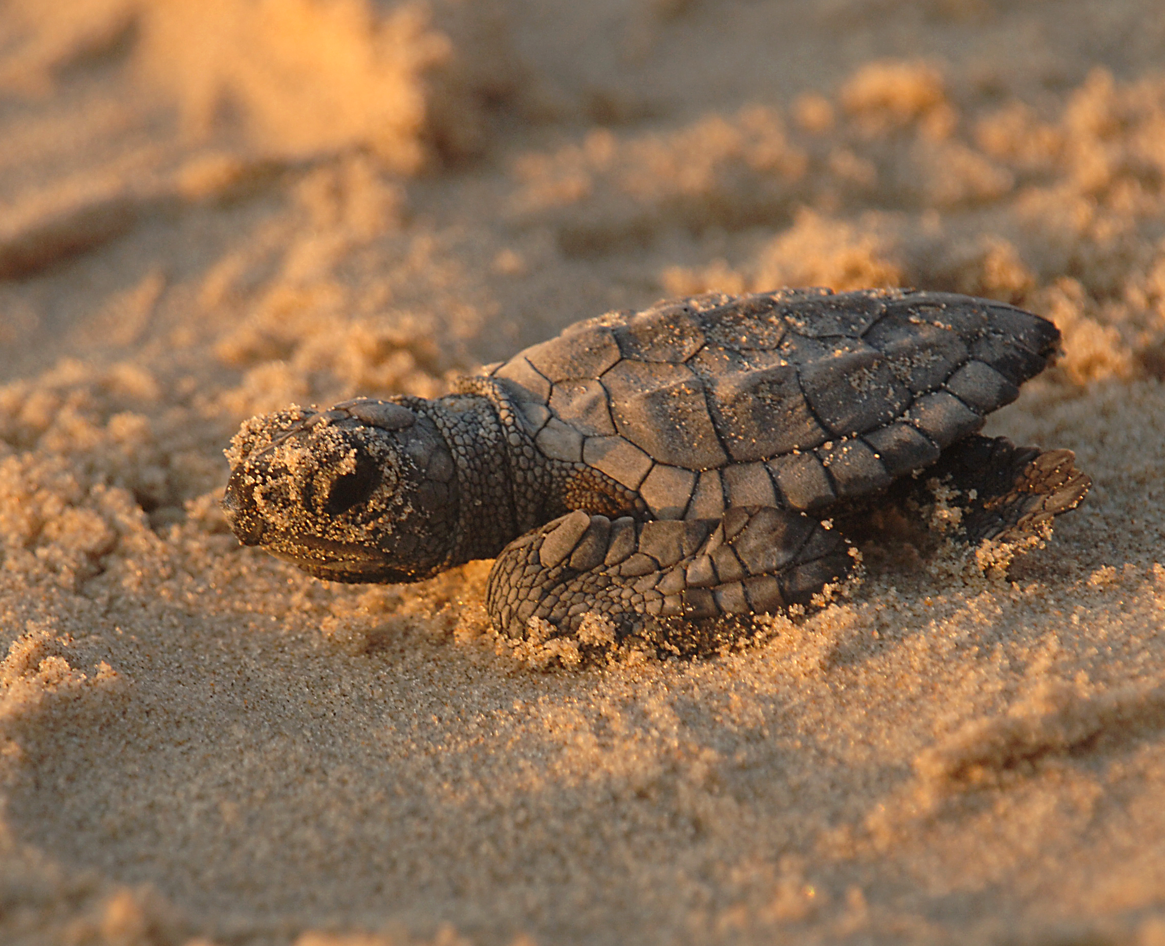 20 Things You Didnt Know About Sea Turtles  Mental Floss